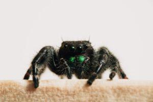 Hoeveel spinnen eet je tijdens het slapen